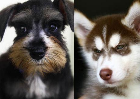 English Dogs Petsite Com Page 2